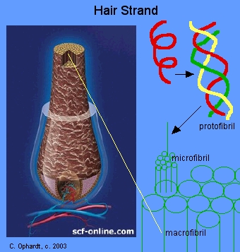 Permanent Hair Wave